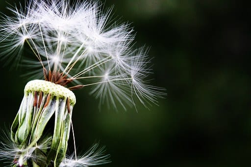 Homeopathic Remedies to cure Allergic Asthma